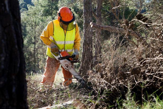 Las brigadas forestales inician la campaña de trabajos preventivos contra incendios forestales en los bosques de la Región, Foto 1