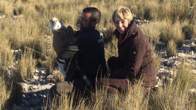 El Centro de Recuperación de Fauna Silvestre consigue rescatar y devolver al medio natural a tres ejemplares de buitre en apenas dos meses, Foto 1