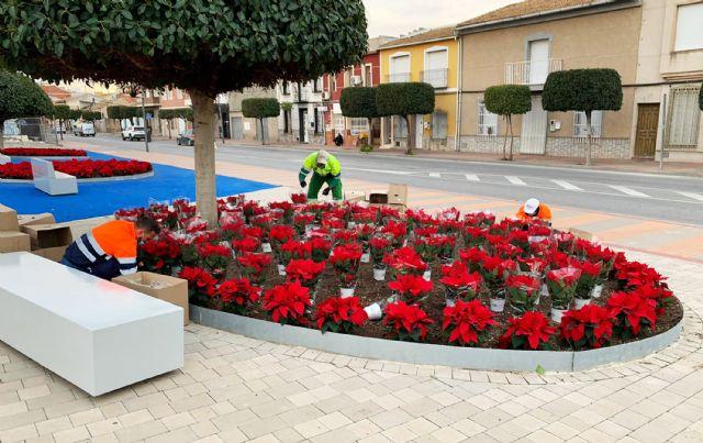 El color de la Navidad llega a los espacios verdes de Las Torres de Cotillas con 3.000 flores de Pascua - 1, Foto 1