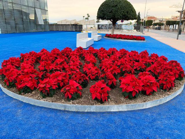 El color de la Navidad llega a los espacios verdes de Las Torres de Cotillas con 3.000 flores de Pascua - 3, Foto 3