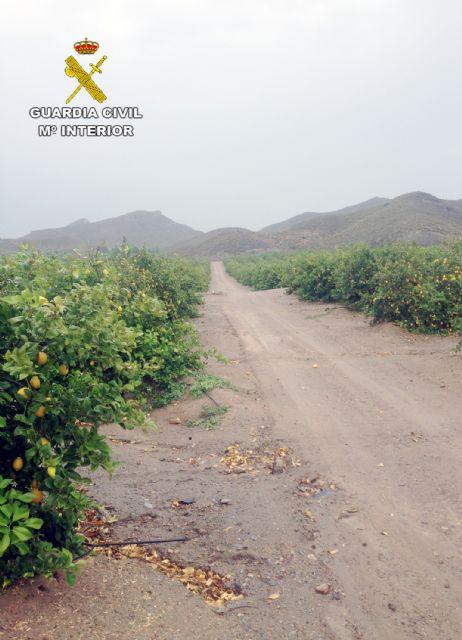 La Guardia Civil esclarece una docena de estafas en el sector agrícola, Foto 3