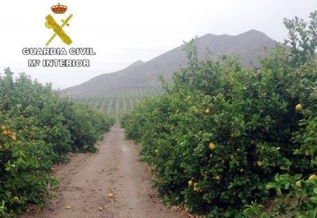 La Guardia Civil esclarece una docena de estafas en el sector agrícola, Foto 1