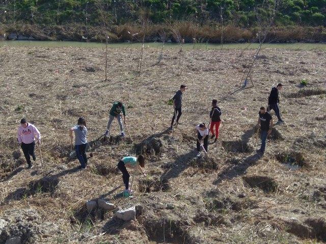 Los alumnos del instituto realizaron una plantación de árboles a orillas del Segura - 1, Foto 1