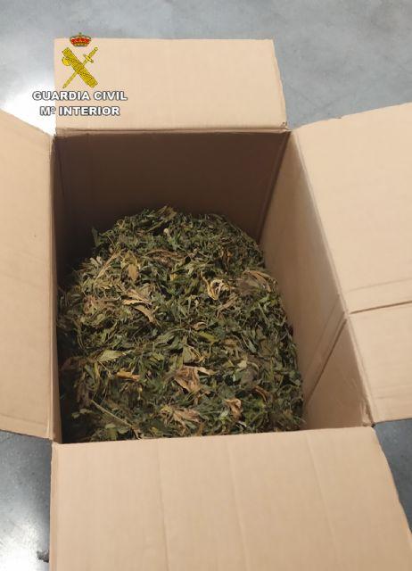 La Guardia Civil desmantela dos nuevos puntos de cultivo y venta de marihuana en Los Alcázares - 1, Foto 1