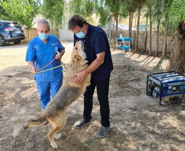 Saorín eleva al pleno una avanzada ordenanza municipal de protección animal - 1, Foto 1