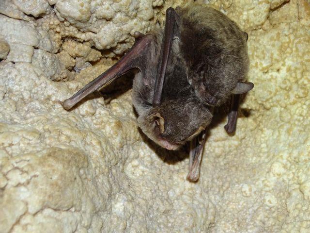 ANSE protege poblaciones de murciélagos mediante la compra de una Zona de Especial Conservación en la Región de Murcia. - 2, Foto 2