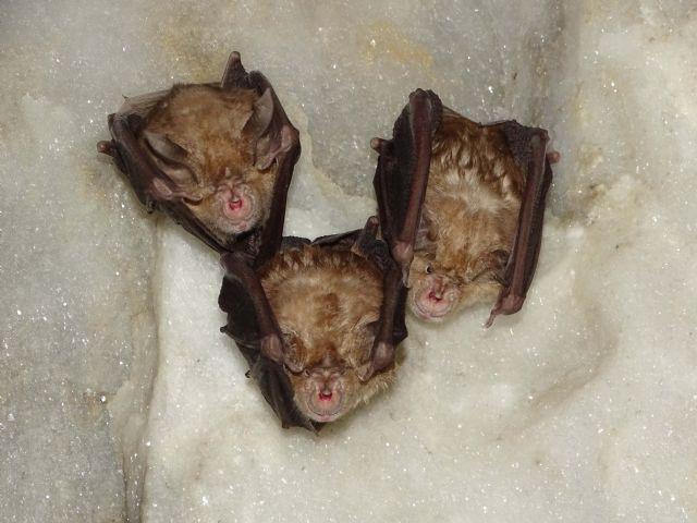 ANSE protege poblaciones de murciélagos mediante la compra de una Zona de Especial Conservación en la Región de Murcia. - 3, Foto 3