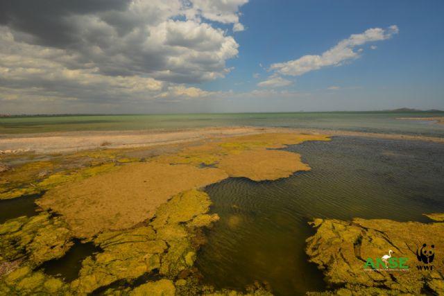 El Mar Menor ante la incertidumbre de una nueva sopa verde - 1, Foto 1