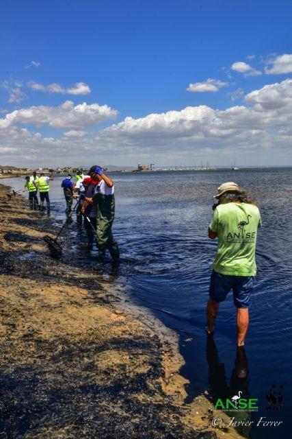 El Mar Menor ante la incertidumbre de una nueva sopa verde - 2, Foto 2
