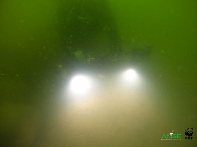 El Mar Menor ante la incertidumbre de una nueva sopa verde - 5, Foto 5