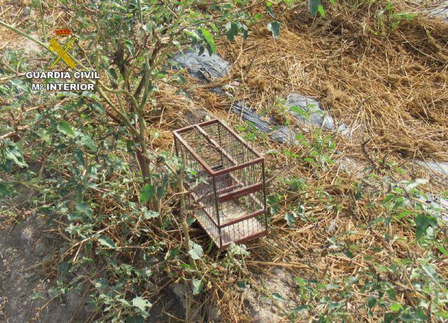 La Guardia Civil investiga a un vecino de Águilas por la captura ilegal de aves fringílidas - 2, Foto 2
