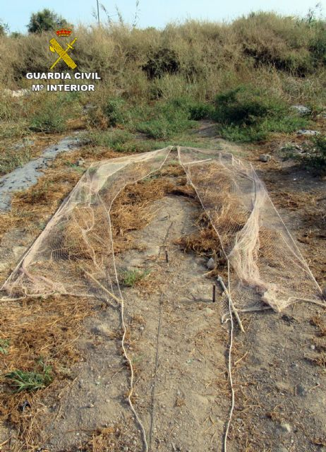 La Guardia Civil investiga a un vecino de Águilas por la captura ilegal de aves fringílidas - 3, Foto 3