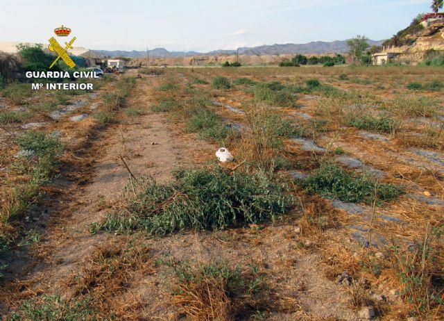 La Guardia Civil investiga a un vecino de Águilas por la captura ilegal de aves fringílidas - 5, Foto 5