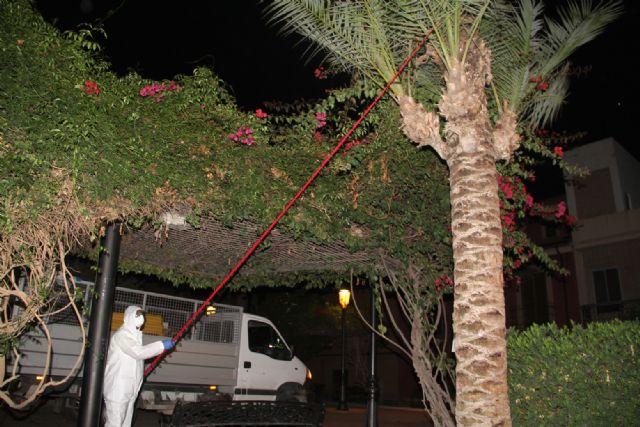 El Ayuntamiento inicia labores de tala y fumigación en las palmeras del municipio para prevenir la plaga del picudo rojo - 2, Foto 2
