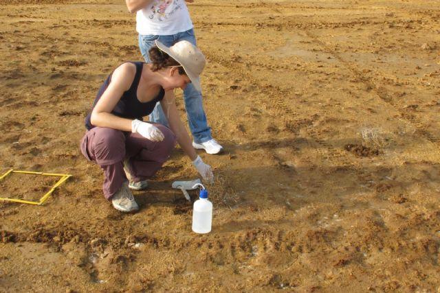 El cambio climático podría acentuar el riesgo de ecotoxicidad de los suelos contaminados de la Sierra Minera que tengan un pH ácido - 1, Foto 1
