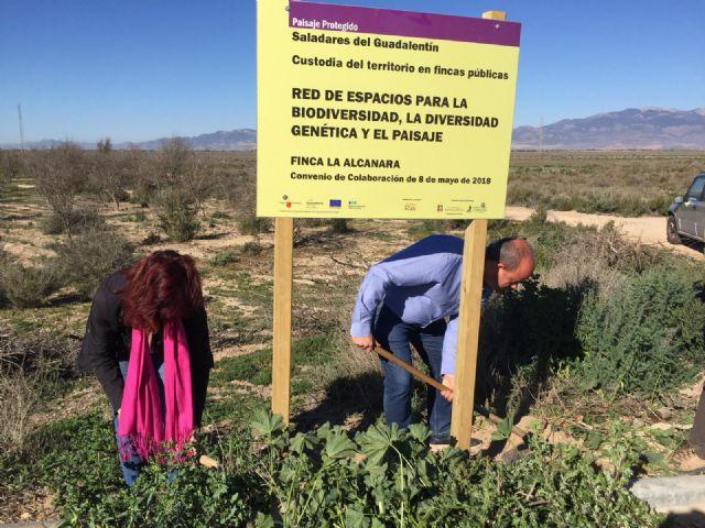 Nuevas señales en La Alcanara para resaltar su valor medioambiental y las acciones de recuperación, Foto 2