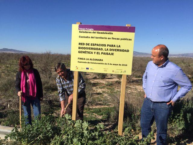 Nuevas señales en La Alcanara para resaltar su valor medioambiental y las acciones de recuperación, Foto 3