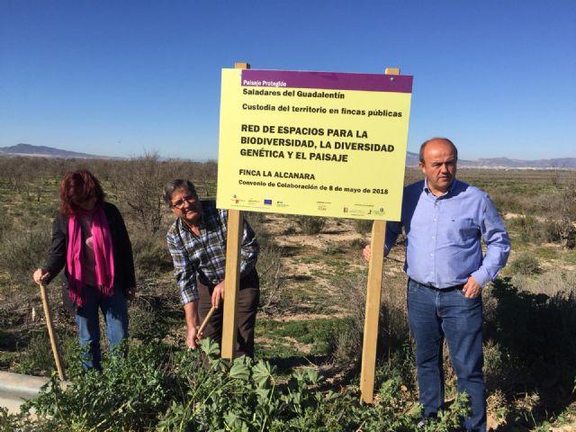 Nuevas señales en La Alcanara para resaltar su valor medioambiental y las acciones de recuperación, Foto 4