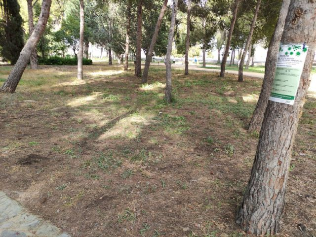 IU VERDES denuncia el más que probable uso y/o abuso de herbicida en el Jardín Botánico de Jumilla y algunas vías públicas - 1, Foto 1