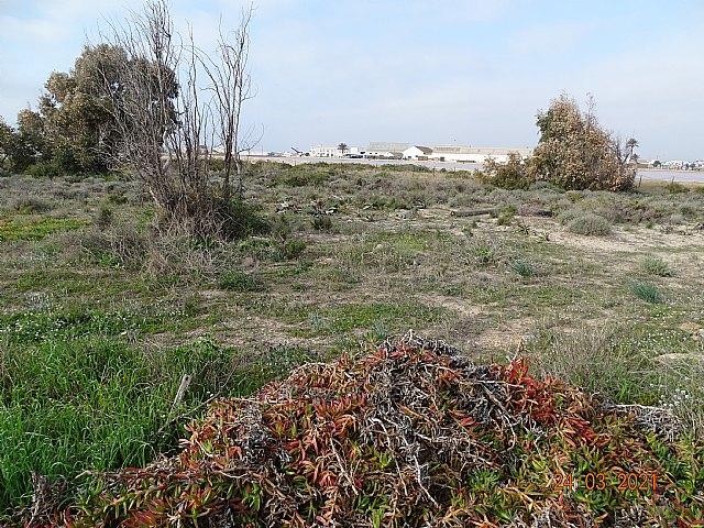 ANSE retira más de 30 m3 de Especies Exóticas Invasoras en los arenales de San Pedro del Pinatar - 1, Foto 1
