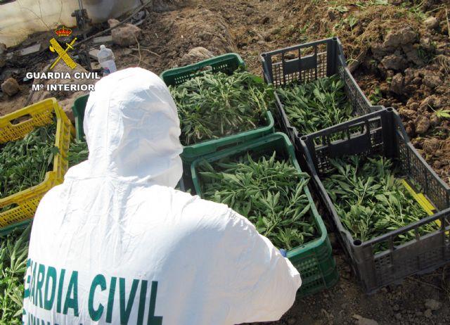 La Guardia Civil desmantela una plantación de marihuana sembrada en un melonar - 2, Foto 2