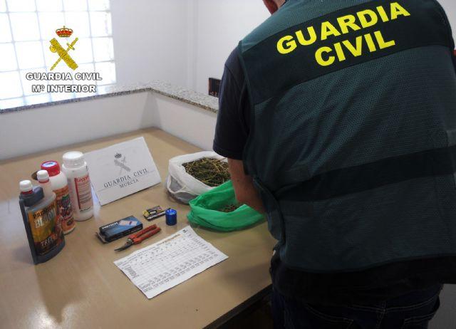 La Guardia Civil desmantela una plantación de marihuana sembrada en un melonar - 4, Foto 4