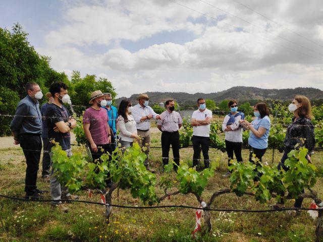 El IMIDA trabaja para conseguir uva de vino sin pepita y resistente a la sequía y a enfermedades como oídio y mildiu - 1, Foto 1