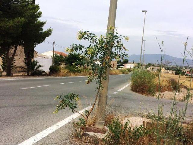 Solicitan a la Dirección General de Carreteras la limpieza de cunetas en varias vías secundarias y la travesía de El Paretón-Cantareros, Foto 4