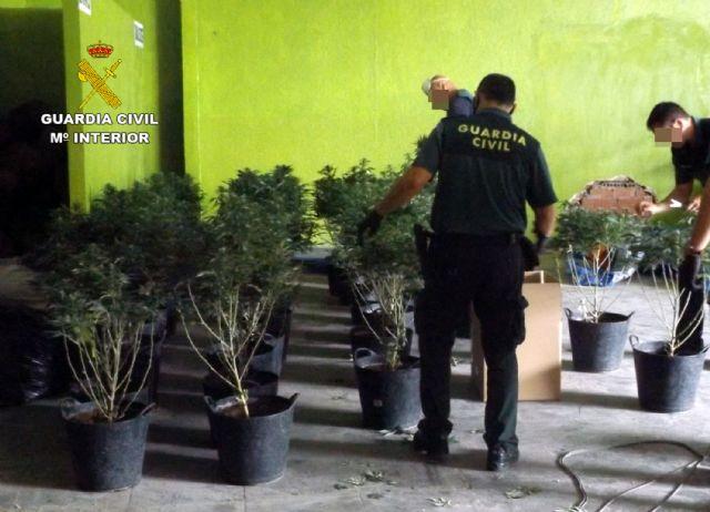 La Guardia Civil desmantela una plantación de marihuana en Mula - 5, Foto 5