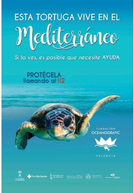 Mazarrón se suma a la campaña Tortugas en el Mediterráneo - 1, Foto 1