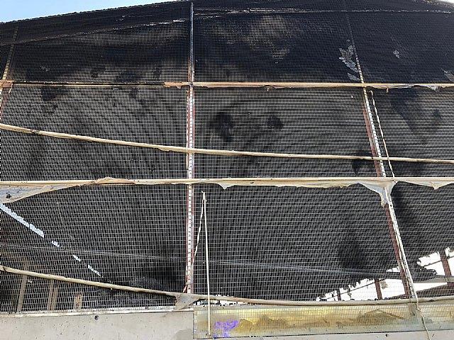 Incendio de una granja porcina en Puerto lumbreras - 2, Foto 2
