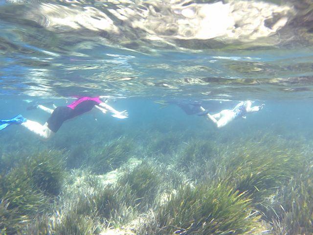 Vuelve CAMONMAR3 para sumergirnos en las aguas del Puerto de Mazarrón y mostrarnos la riqueza de sus fondos marinos, Foto 1
