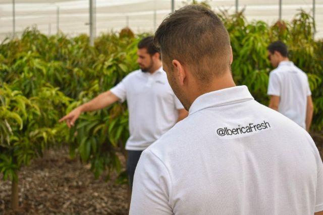 Consiguen la primera variedad de mango cultivado en Alicante tras 17 años de estudio - 2, Foto 2