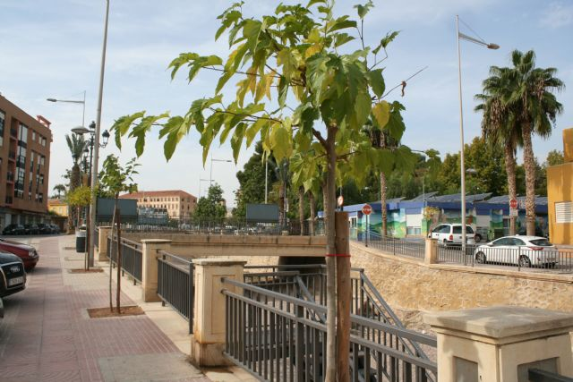 They plant more than thirty new mulberry trees to complete the parterres of both margins of the La Santa ravine - 3
