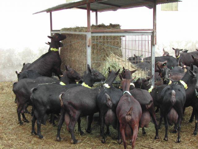 Investigadores de la Universidad de Murcia asesoran al Ministerio de Agricultura, Pesca y Alimentación en el control de enfermedades del sector ganadero - 2, Foto 2