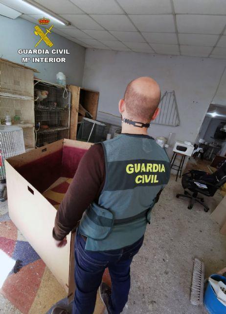 La Guardia Civil desmantela en Cartagena un tentadero ilegal dedicado a peleas de gallos - 2, Foto 2