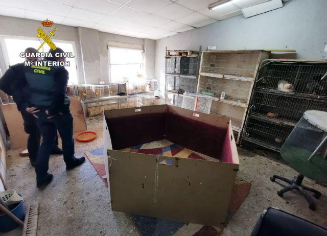 La Guardia Civil desmantela en Cartagena un tentadero ilegal dedicado a peleas de gallos - 3, Foto 3