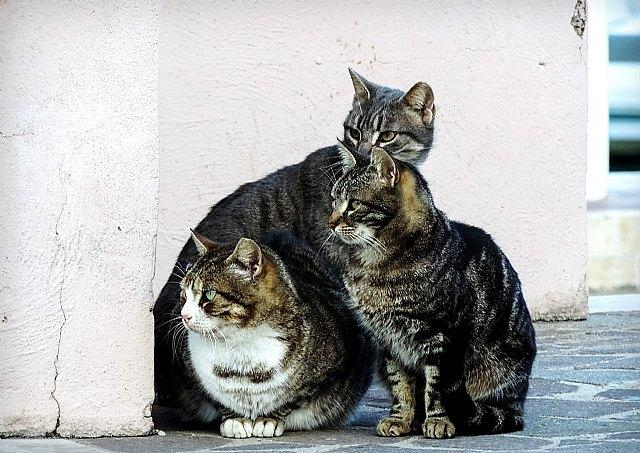 Los gatos atraen la buena suerte y alejan a los demonios - 1, Foto 1