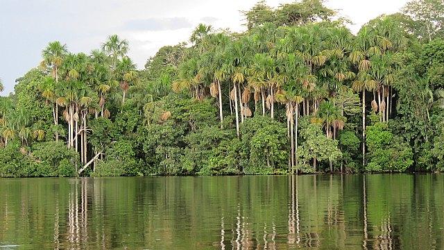 Hallan altos niveles de plomo en sangre en población indígena de la Amazonía peruana - 1, Foto 1