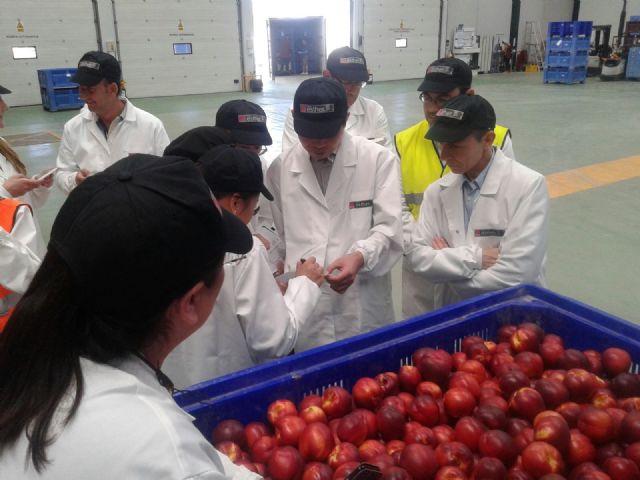 China autoriza la exportación de melocotones y ciruelas a once almacenes de la región de Murcia, Foto 2