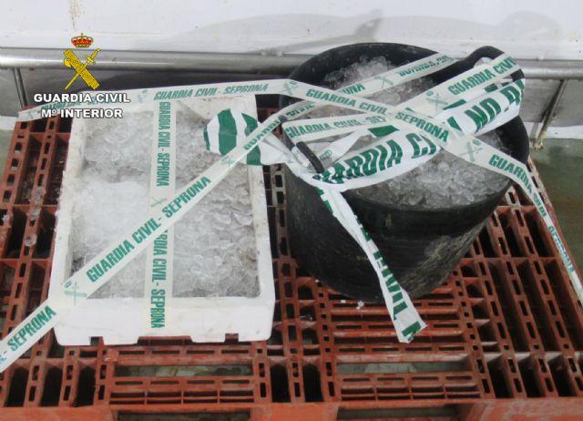 La Guardia Civil interviene en Mazarrón más de 35 kilos de pulpo capturado ilícitamente, Foto 1