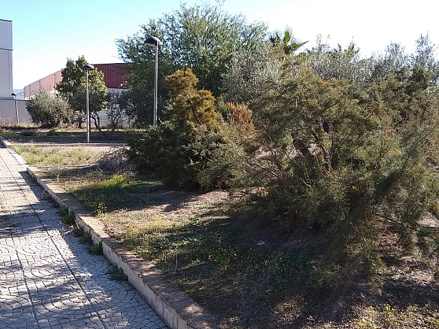 The PP denounces the neglect and neglect in which this government team has plunged the maintenance and cleaning of green areas of the industrial estate, Foto 3
