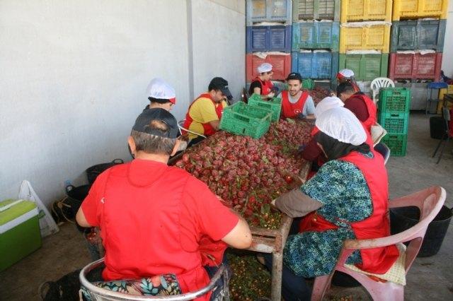 Acuerdan la nueva puesta en marcha del Consejo Asesor Agrario y Ganadero de Totana, Foto 5