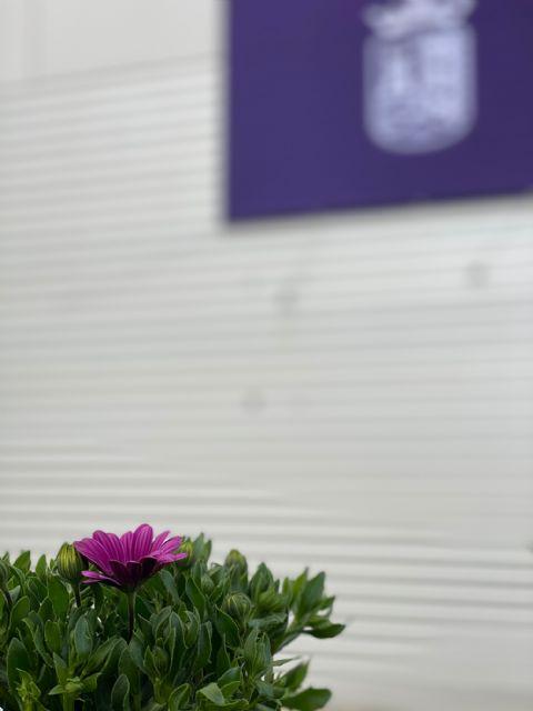 Torre Pacheco se ilumina de morado para conmemorar el Día Internacional de las Mujeres - 3, Foto 3