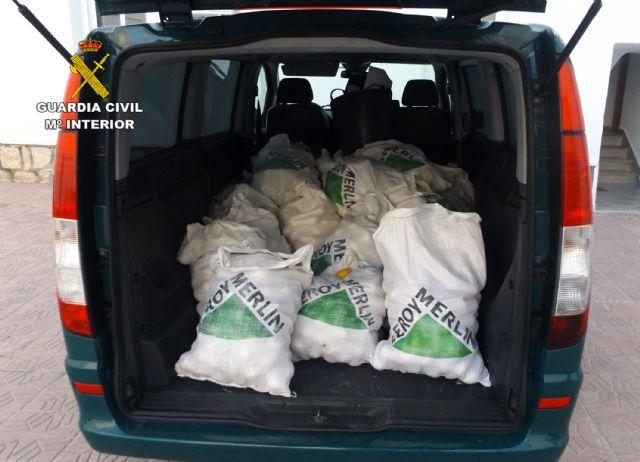 La Guardia Civil desmantela un grupo delictivo dedicado a la sustracción de limones en el Valle del Guadalentín, Foto 2