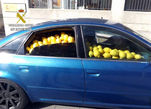 La Guardia Civil desmantela un grupo delictivo dedicado a la sustracción de limones en el Valle del Guadalentín, Foto 3