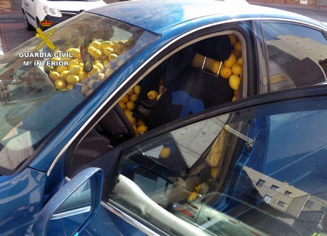 La Guardia Civil desmantela un grupo delictivo dedicado a la sustracción de limones en el Valle del Guadalentín, Foto 4