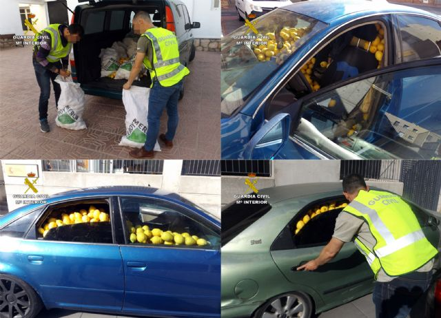 La Guardia Civil desmantela un grupo delictivo dedicado a la sustracción de limones en el Valle del Guadalentín, Foto 5