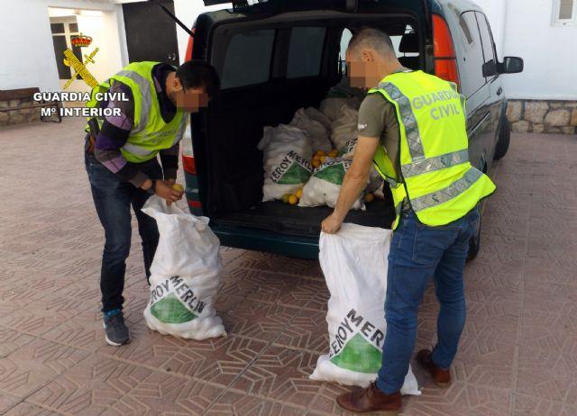 La Guardia Civil desmantela un grupo delictivo dedicado a la sustracción de limones en el Valle del Guadalentín, Foto 6