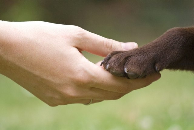 [Proponen la creación de una Mesa de Bienestar Animal en Totana para coordinar acciones de protección y defensa de las mascotas